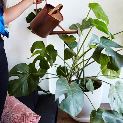 Plante de interior care vor supraviețui în apartamentele noastre - Plante de interior care vor supraviețui în apartamentele noastre