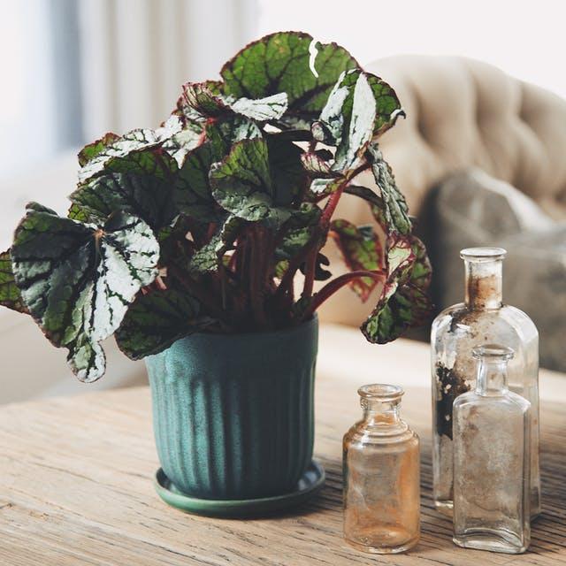 Plante de interior care vor supraviețui în apartamentele noastre - Plante de interior care vor supraviețui