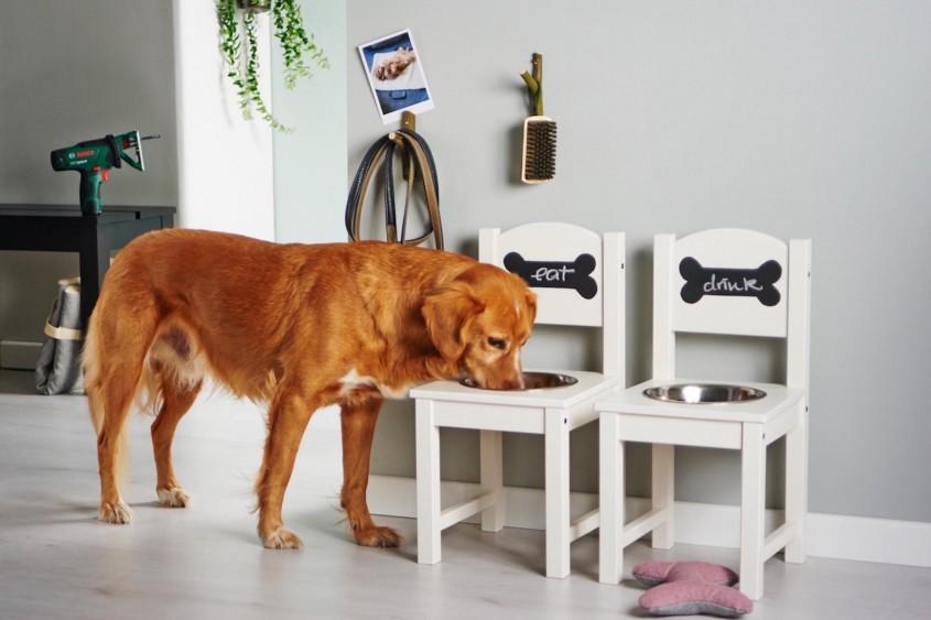 Sufragerie si bucatarie: bol pentru caini - Sufragerie si bucatarie: bol pentru caini