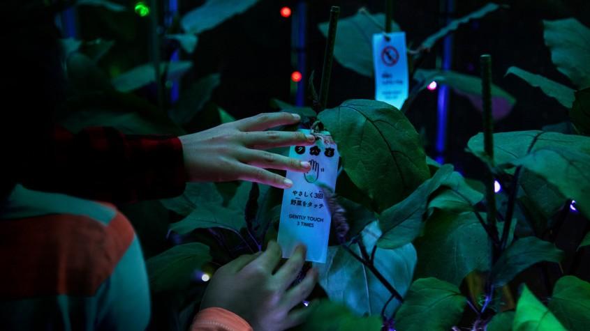 Sera in care daca atingi plantele declansezi un show de lumini si culori! - Sera în