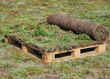 Strat de vegetatie biodegradabil Sedum-mix - Acoperisuri verzi