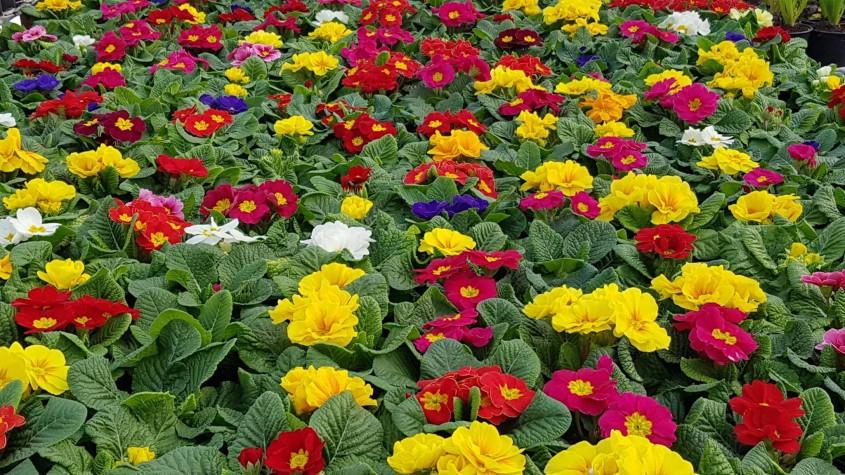 Primavara a venit! Da, in serele Biosolaris - Primăvara a venit! Da, în serele Biosolaris