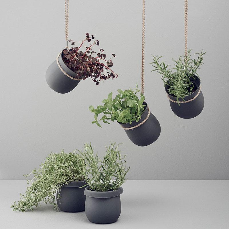 Idei pentru gradina din apartament - plante agatate de pereti si tavane - Idei pentru gradina