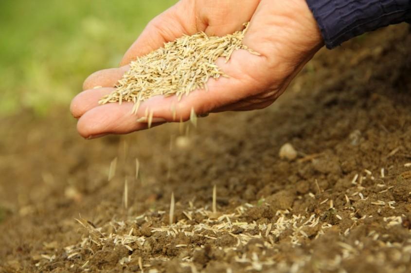 Insamantare gazon - Ce plantam la inceputul toamnei?