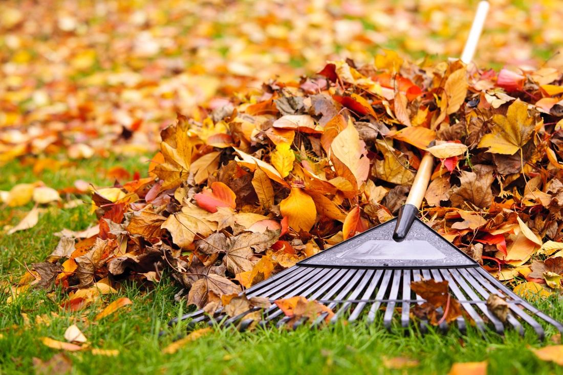 Imagini pentru Sub frunzele uscate