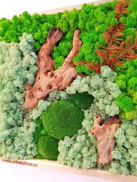 Tablou cu muschi, licheni si bucati de lemn - Tablouri cu muschi si licheni stabilizati
