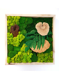 Tablou cu plante - Tablouri cu muschi si licheni stabilizati