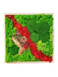 Tablou multicolor cu muschi si licheni - Tablouri cu muschi si licheni stabilizati