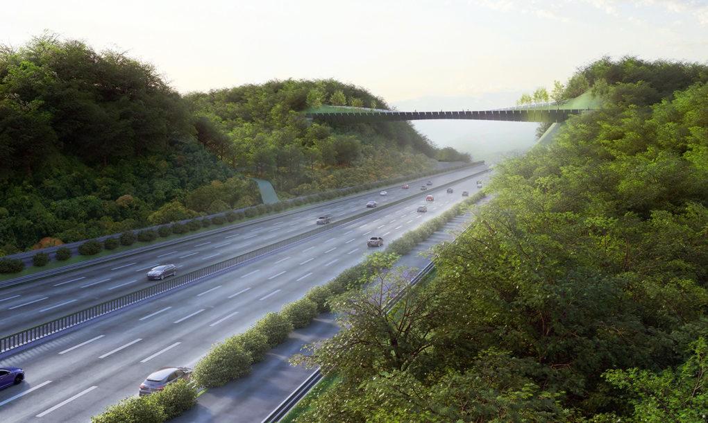 Un pod cu vegetatie tine la distanta animalele salbatice de o autostrada aglomerata - Un pod cu vegetație ține la distanță animalele sălbatice de o autostradă aglomerată