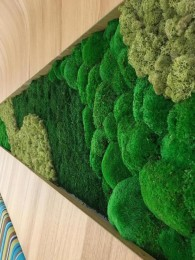 Perete verde cu muschi si licheni vazut de aproape - Pereti verzi cu muschi si licheni