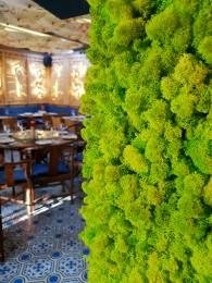 Detalii alcatuire perete verde - Pereti verzi cu muschi si licheni