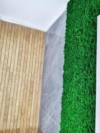 Detaliu perete verde - Pereti verzi cu muschi si licheni