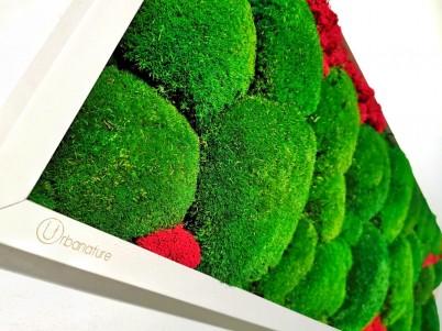 Detaliu tablou cu muschi verzi - Tablouri cu muschi si licheni stabilizati