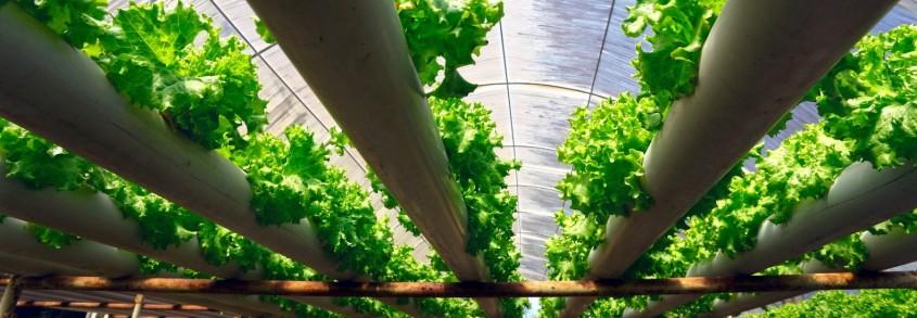 Ce este agricultura hidroponică și unde se poate pune în practică - Ce este agricultura hidroponică
