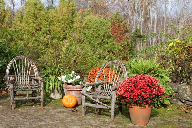 Lucrari in gradina - ce ai de facut in noiembrie? - Lucrări în grădină - ce