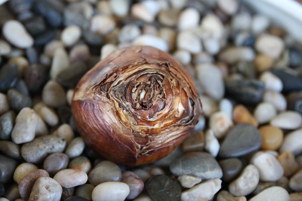 Bulb - Rocărie, flori și pietriș - 3 elemente pentru un design unic în grădină
