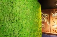 Perete viu cu licheni in restaurant - Pereti verzi