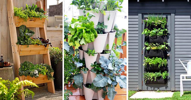 Mini-grădini de legume pentru începatori - Mini-grădini de legume pentru începatori