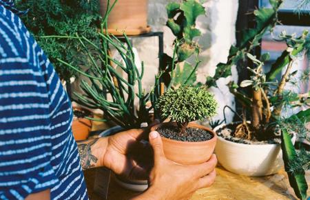 6 greseli pe care oricine tine plante in apartament le poate face - 6 greșeli pe care oricine ține plante în apartament le poate face