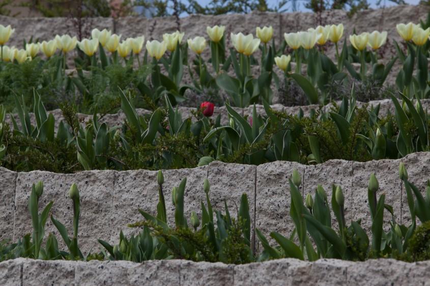 Zidurile ornamentale - un plus de stil in amenajarile exterioare - Zidurile ornamentale - un plus