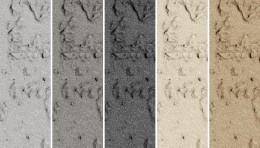 Textura Travertine - Texturi disponibile pentru Concrete Skin