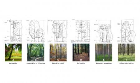 Ocolul Silvic Ceh - planuri - Sediul central al Ocolului Silvic Ceh pare că se contopește cu pădurea