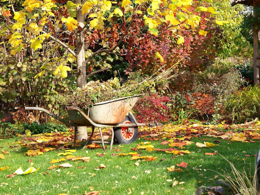 Cand toamna incepe sa se aseze peste gradina ce ai de facut la inceputul lui septembrie?