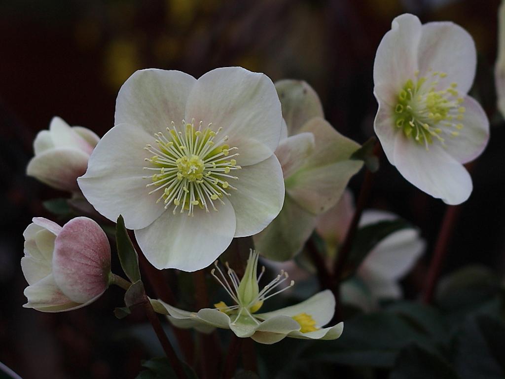 Spanz - Flori si plante la ghiveci