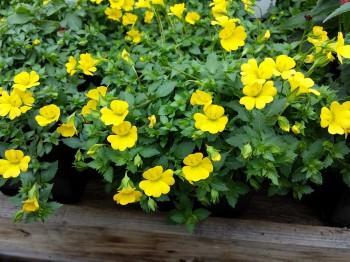 Mercadonia - Flori si plante la ghiveci