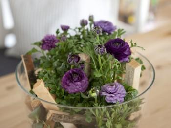 Ranunculus - Flori si plante la ghiveci