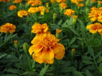 Craite - Flori si plante la ghiveci