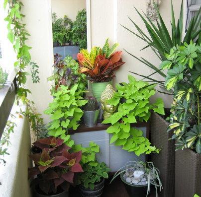 O gradina bogata, intr-un balcon mic (foto: gardenideas1.blogspot.com) - Balcoane si spatii mici