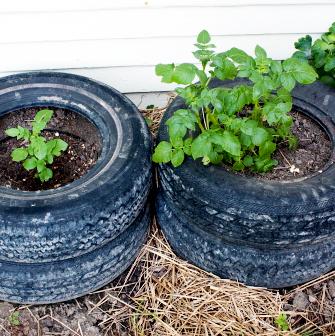 Cateva pneuri vechi pot gazdui o colectie de plante aromate (foto thecompostking com) - Suporturi si