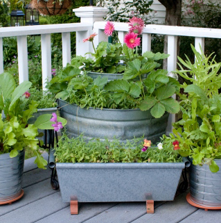Galetile vechi si alte recipiente din cositor pot fi refolosite in gradina (foto thecompostking com) -