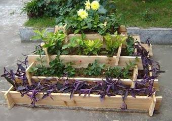 Un suport etajat permite punerea in valoare a plantelor care in timp vor imbraca si marginile
