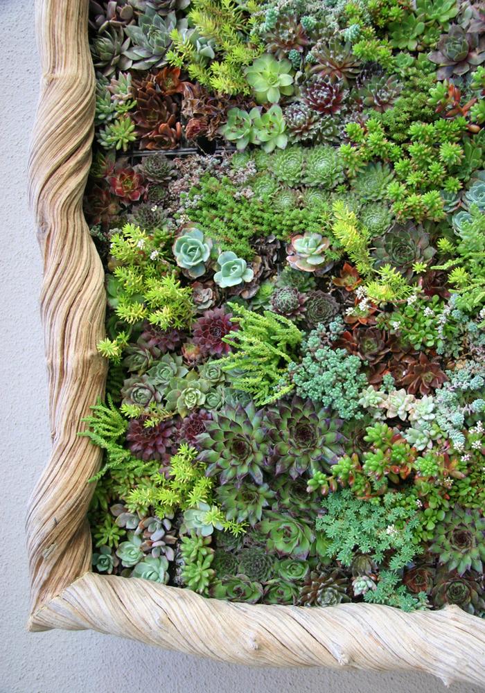 cactusii si plantele suculente se fixeaza foarte bine si peverticala (foto Caitlin Atkinson floragrubb com) -