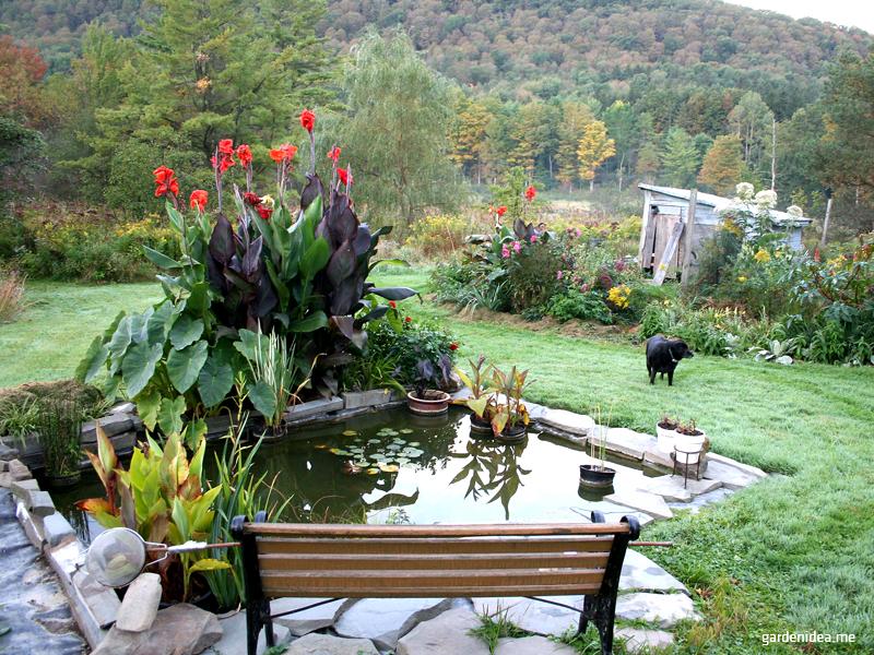 Grădina acvatică - Grădina acvatică
