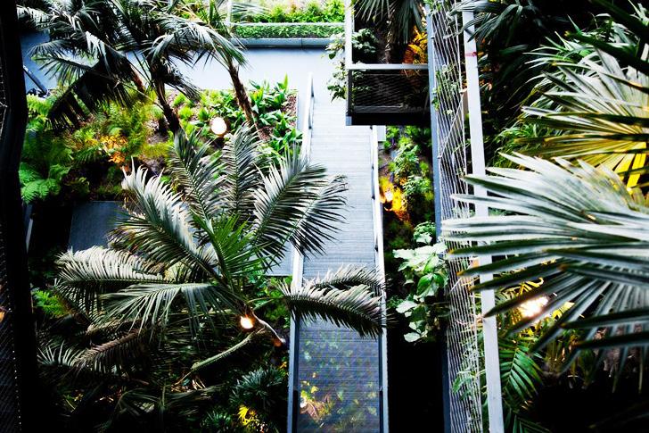 Ferestre sub forma de palmier - Ferestre sub forma de palmier