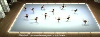 Standfast - Pardoseli pentru sali de dans