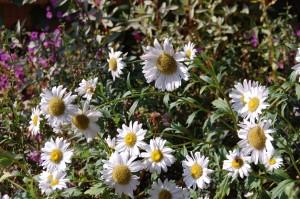 Plante de gradina - Plante de gradina