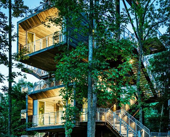 Casa din copac  - Casa din copac