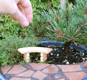 foto: minigardener.wordpress.com - Cactusii si plantele suculente mici sunt usor de ingrijit (foto: minigardener.wordpress.com)