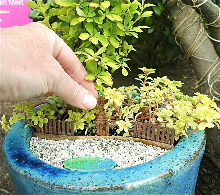 foto minigardener wordpress com - Cactusii si plantele suculente mici sunt usor de ingrijit (foto minigardener