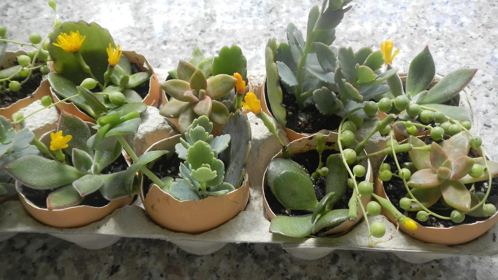 O Grădină Intr Un Ou Decoraţiuni Cu Plante Pentru Masa De Pasti