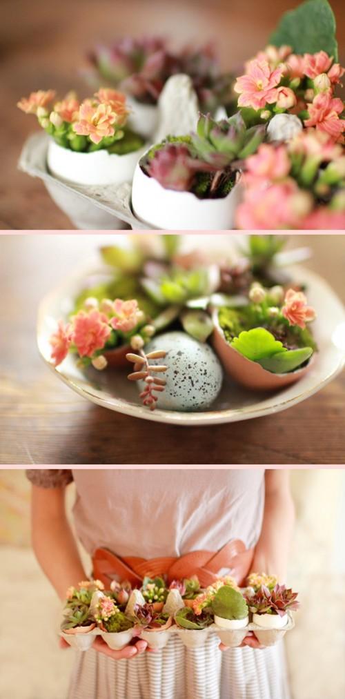 Foto: www.easydreamerphotography.com - Butasii de crassula ovata pot fi tinuti cateva saptamani astfel (foto: www.easydreamerphotography.com)