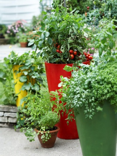 "O gradina cu diverse plante ""culinare"" poate fi amenajata si in ghivece (foto: www.shelterness.com) - O gradina cu diverse plante ""culinare"" poate fi amenajata si in ghivece (foto: www.shelterness.com)"