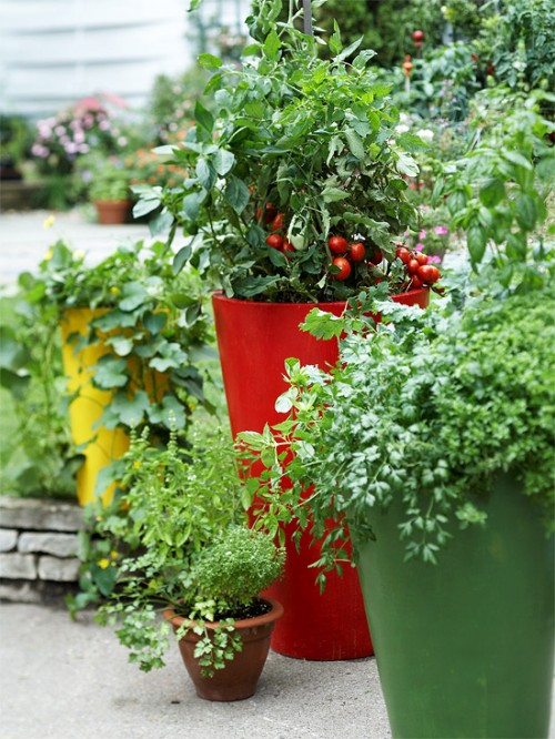"O gradina cu diverse plante ""culinare"" poate fi amenajata si in ghivece (foto www shelterness com)"
