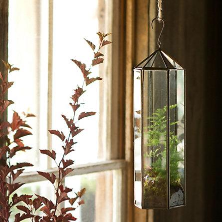 Terariumurile sunt ecosisteme in miniatura (foto www thegardenerseden com) - Terariumurile sunt ecosisteme in miniatura (foto