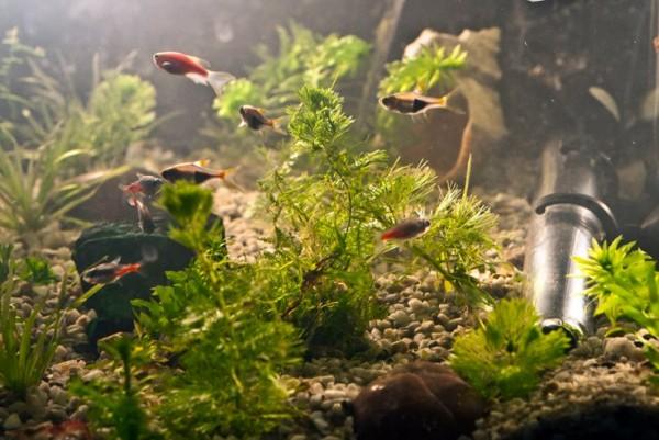 Estetic, un acvariu este considerat un punct de atractie in orice incapere (foto: Alina Miron) - Estetic, un acvariu este considerat un punct de atractie in orice incapere (foto: Alina Miron)