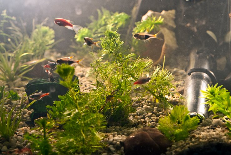Estetic un acvariu este considerat un punct de atractie in orice incapere (foto Alina Miron) -